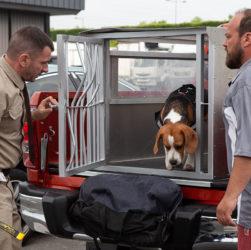 Куш собачий в онлайн-кинотеатрах